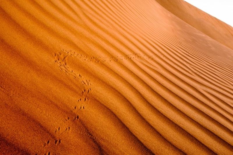 Sand dune, Wahiba Sands