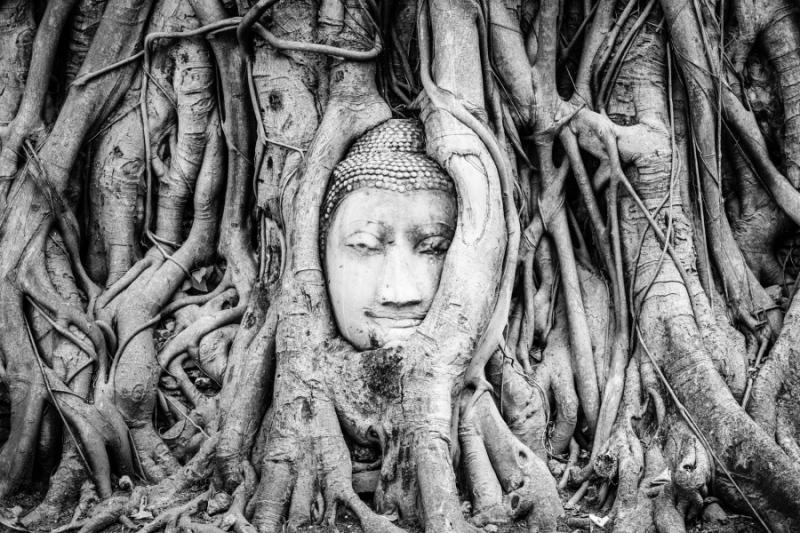 Buddha Head, Ayutthaya